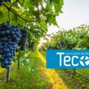Software ERP vertical de gestión de bodegas de Tecon y Business Central